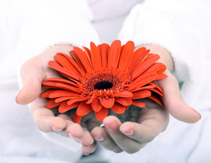 Gerbera in women hand. Spa resord.